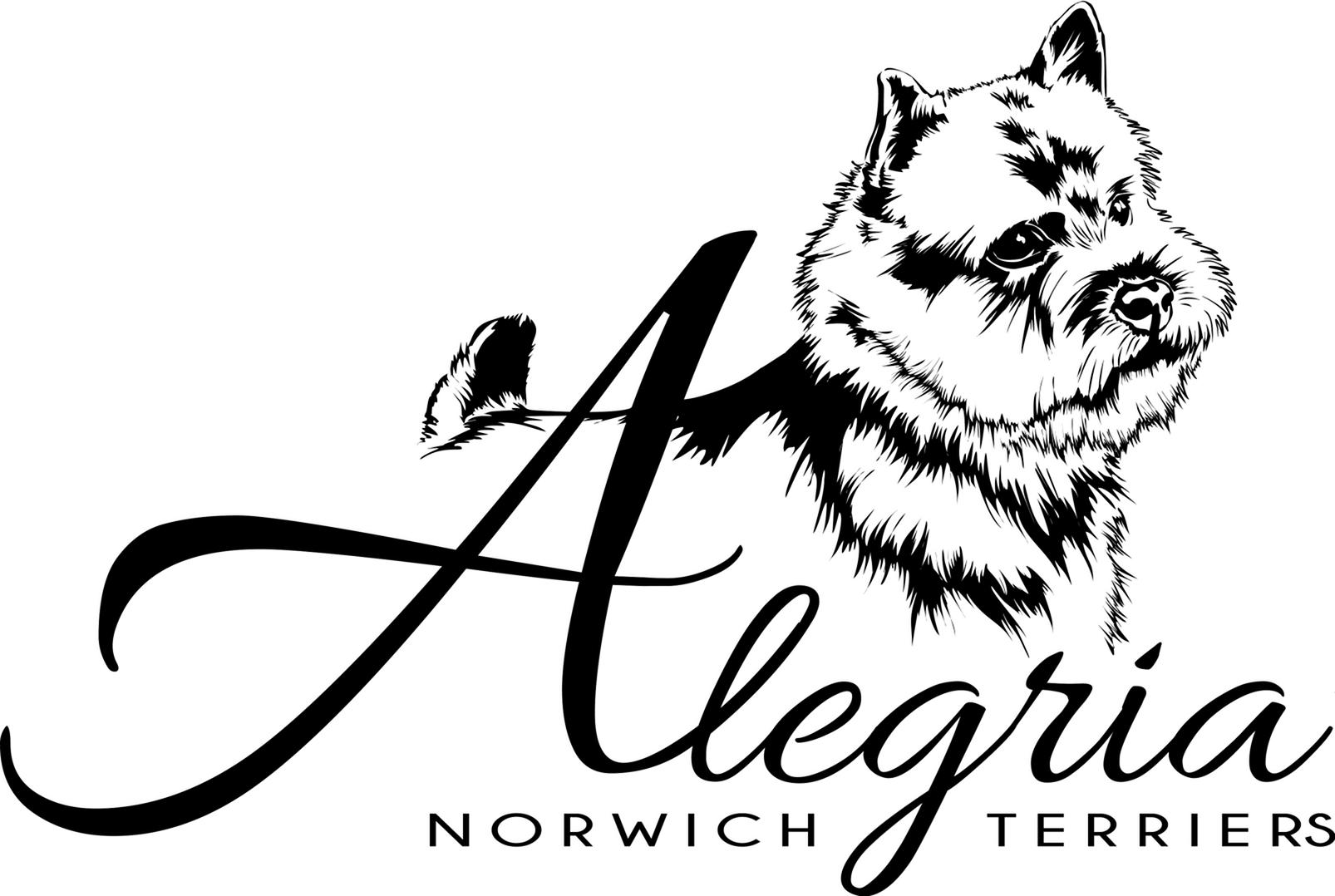 Alegria Norwich Terriers